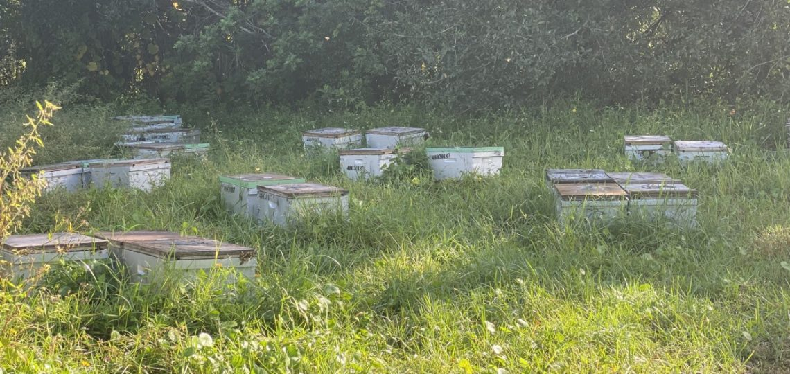 Busy Bees at Michael A. Gilkey, Inc.